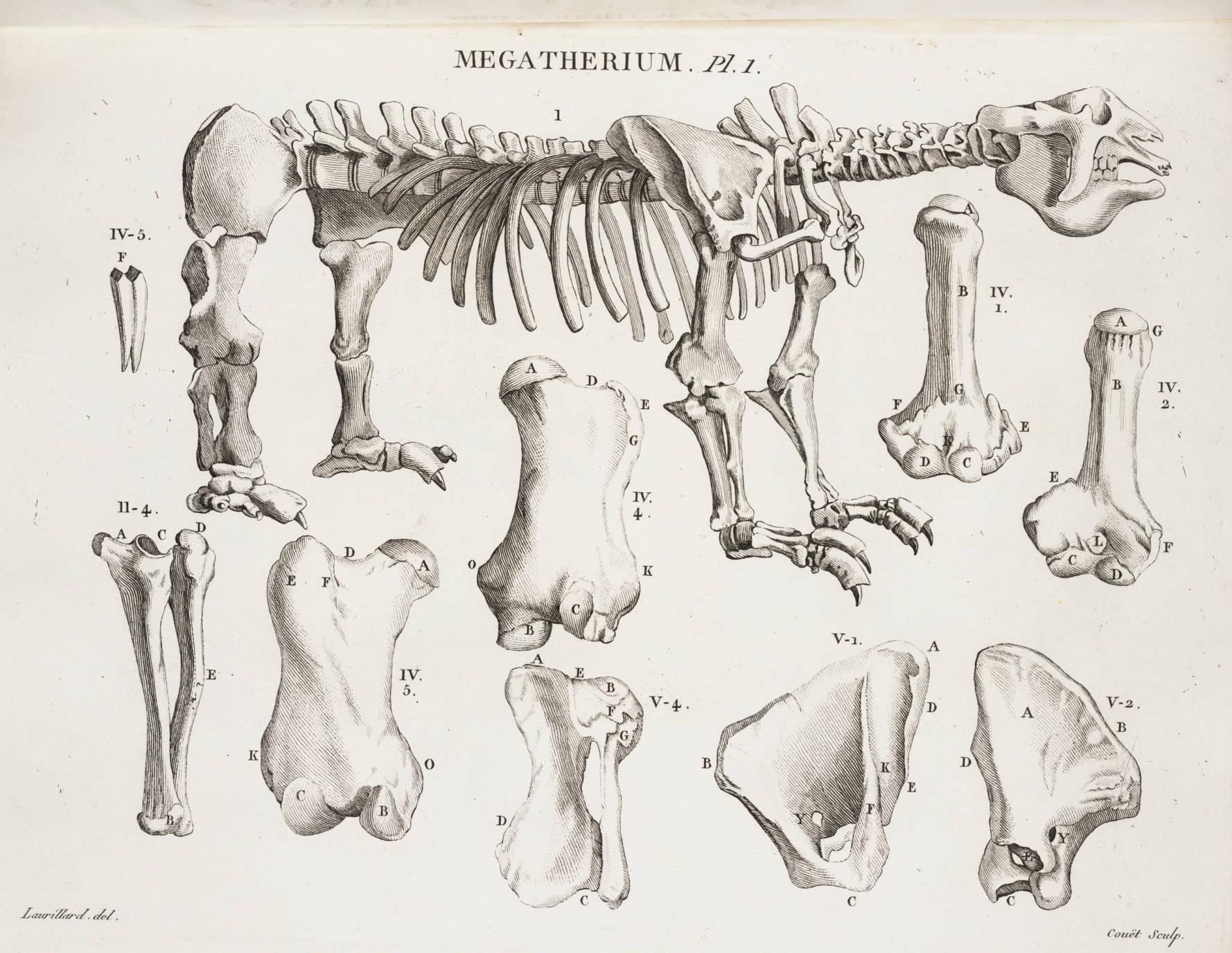 Megatherium según Georges Cuvier13
